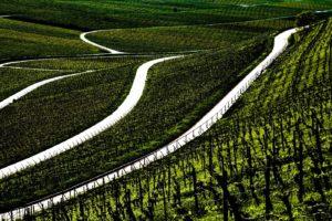 Weinland-Franken